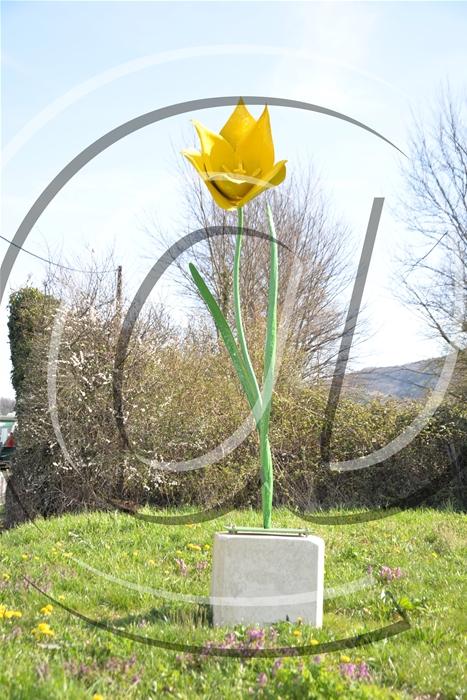 fete de la tulipe de vigne 2015 001_GF